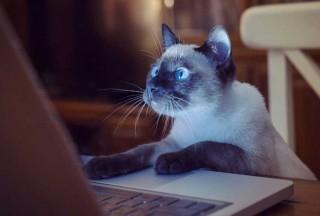cat-computer-850x575-120118