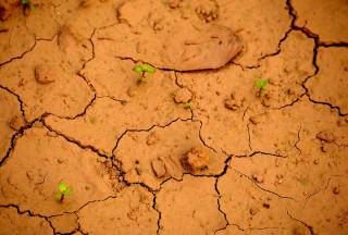 soil-850x575