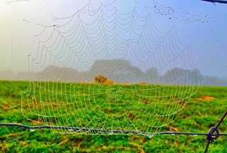 Spider-Web-Green850x575