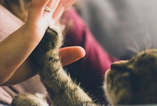 Do pets have an impact on our mental health?