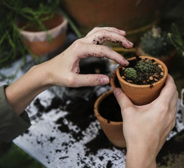Adding seedlings to a pot
